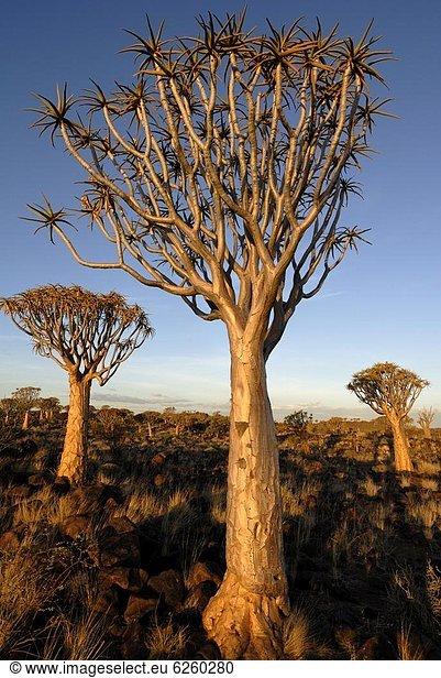 Afrika , Keetmanshoop