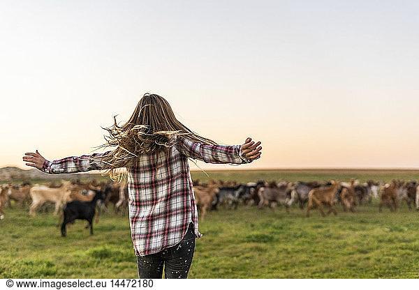 Back view of girl herding a goat herd, Back view of girl herding a goat herd