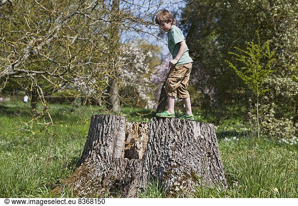 Boy Climbing On Old Stump In Country Park Kent,  England,  Uk