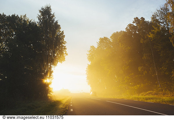 Country road at morning