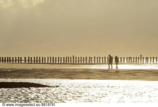 Couple walking in front of groynes,  in backlight,  Wangerooge,  East Frisian Islands,  East Frisia,  Lower Saxony,  Germany