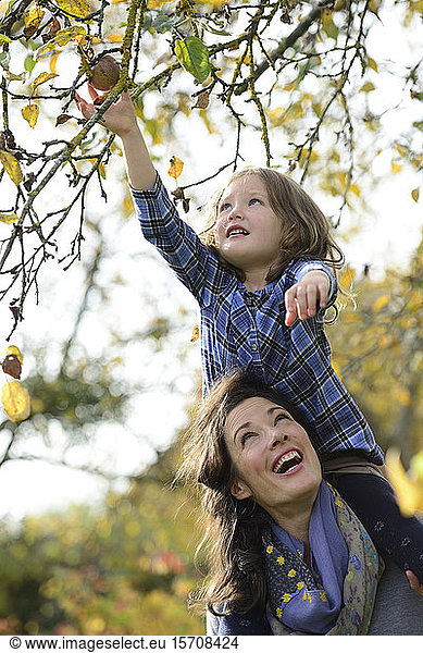 Daughter sitting on shoulders of her mother,  reaching apple