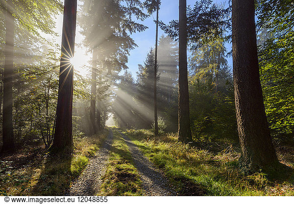 Forest path with morning mist and sun beams in the Odenwald hills in Hesse,  Germany