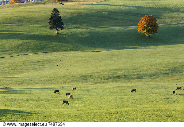 Germany,  Bavaria,  View of pasture at Ussenburg
