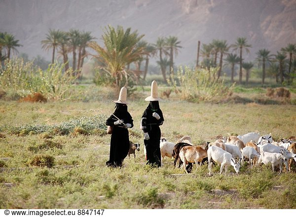 Hadramaut women with full black dresses,  gloves and high hats; The high hats are supposed to bring fresh air to the head; Yemen;.