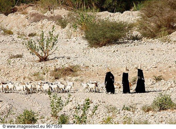 hinter, hoch, oben, Frau, gehen, Hut, Ziege, Capra aegagrus hircus, 3, Jemen