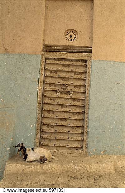 hoch, oben, nahe, Ziege, Capra aegagrus hircus, Wand, Tür, Großstadt, verziert, frontal, Naher Osten, Shibam, Jemen