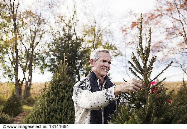 Man examining pine trees in farm