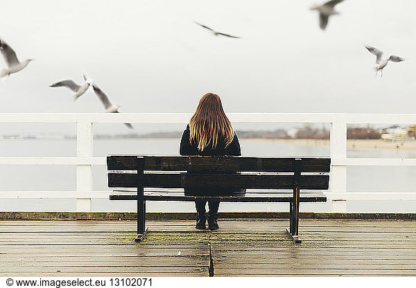 Rear view of woman sitting on bench by railing against sea, Rear view of woman sitting on bench by railing against sea