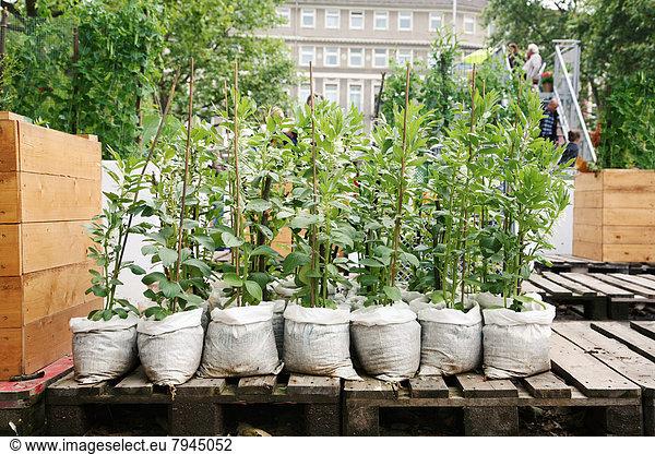 Urban Gardening,  Frankfurt am Main,  Hesse,  Germany,  Europe